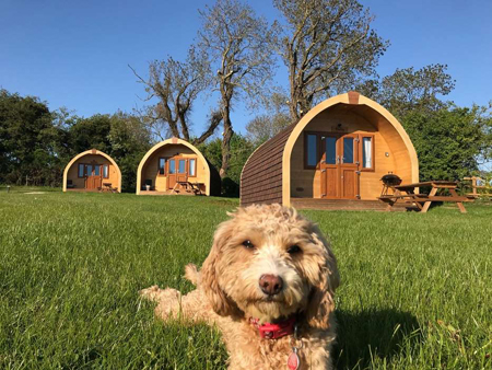 3 luxury pods, 2 are dog friendly